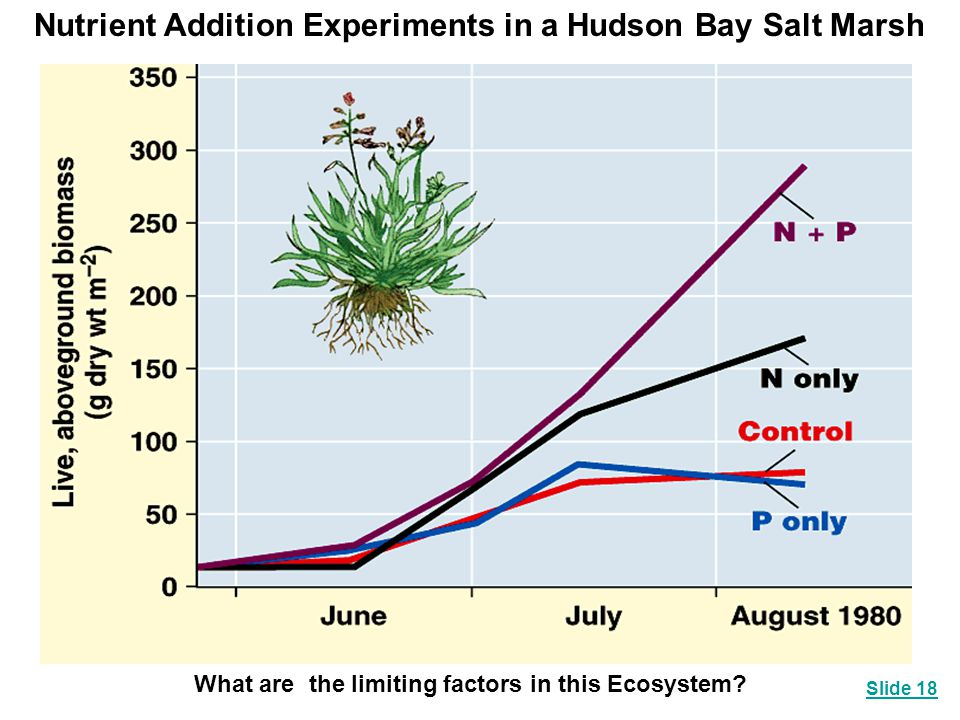 Nutrient Addition Experiments in a Hudson Bay Salt Marsh
