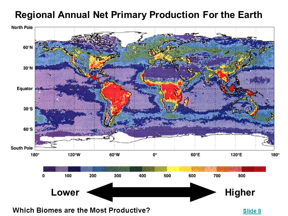 Regional Annual Net Primary Production For the Earth