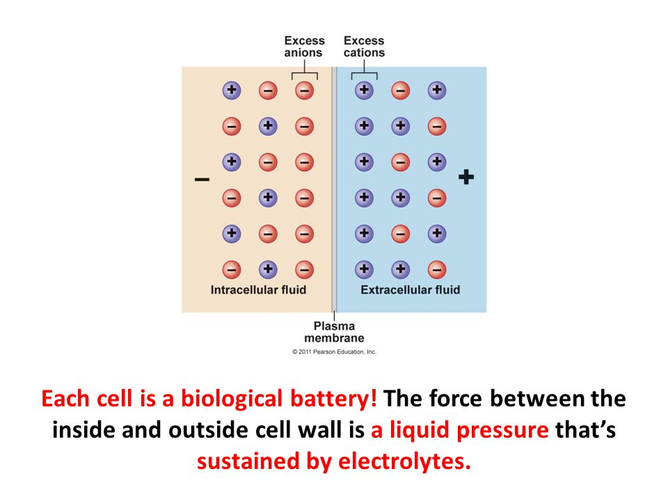 Each cell is a biological battery