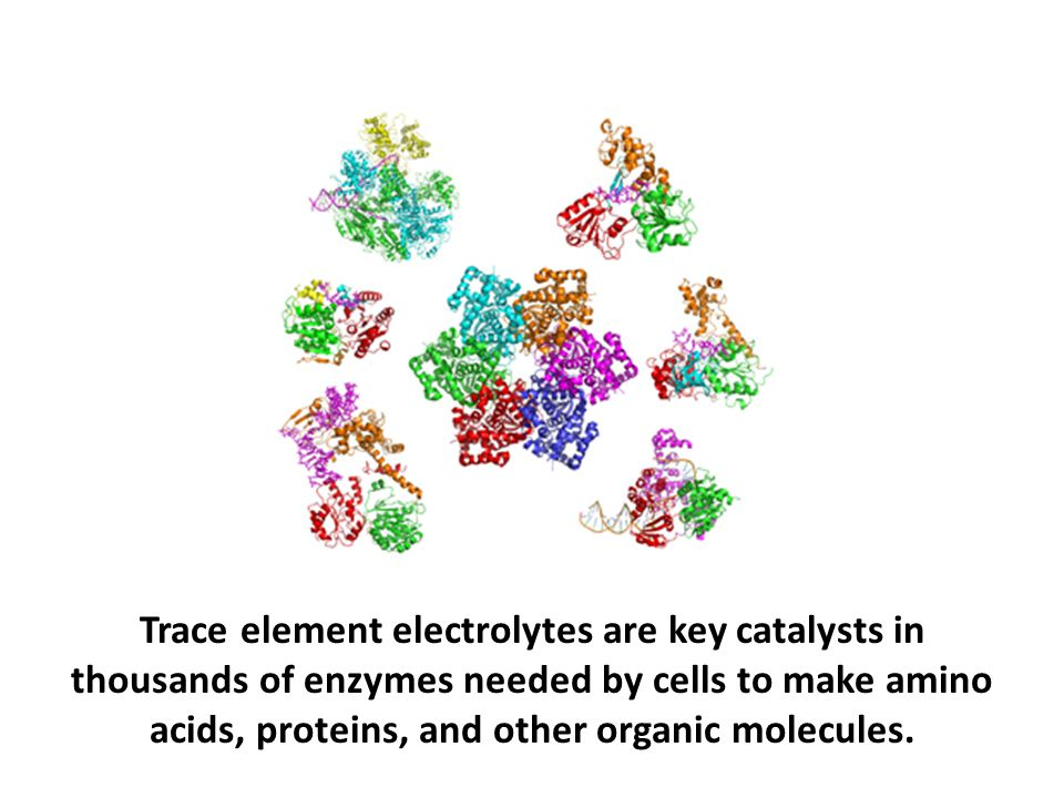 Trace element electrolytes are key catalysts in thousands of enzymes needed by cells to make amino acids, proteins, and other organic molecules.