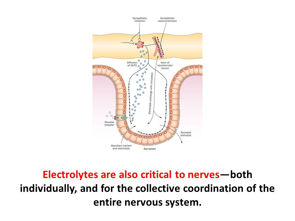Electrolytes are also critical to nerves—both individually, and for the collective coordination of the entire nervous system.