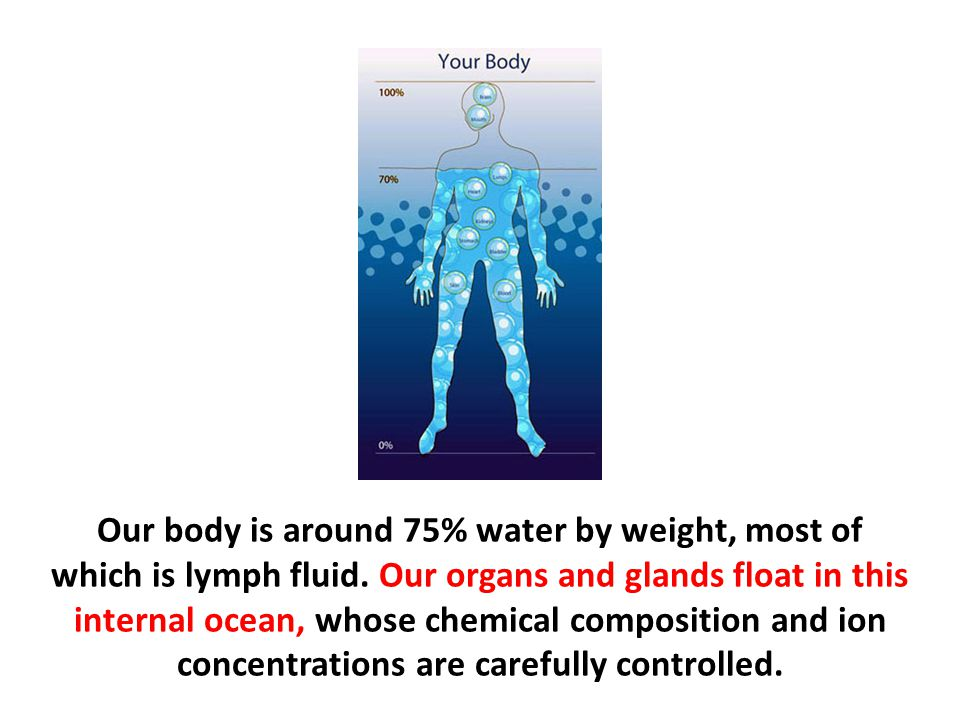 Our body is around 75% water by weight, most of which is lymph fluid