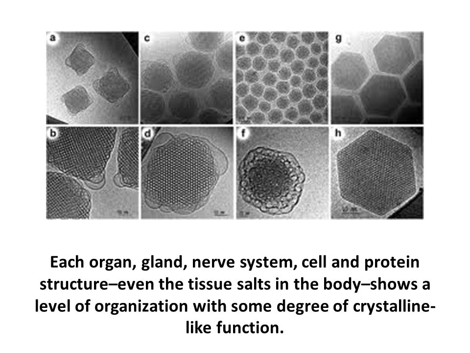 Each organ, gland, nerve system, cell and protein structure–even the tissue salts in the body–shows a level of organization with some degree of crystalline-like function.