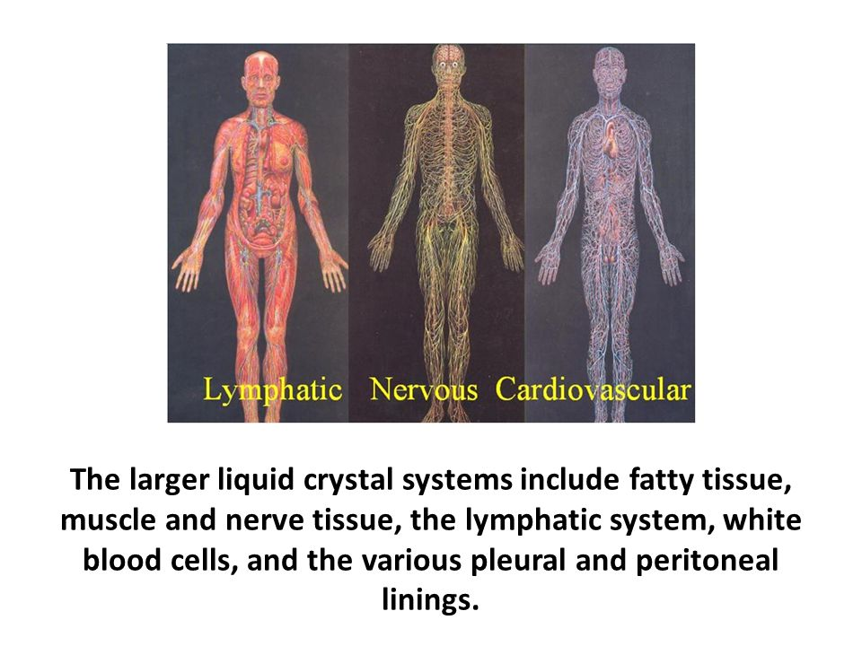 The larger liquid crystal systems include fatty tissue, muscle and nerve tissue, the lymphatic system, white blood cells, and the various pleural and peritoneal linings.