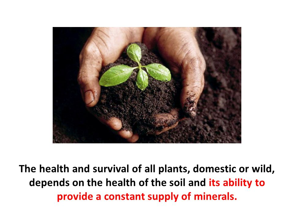 The health and survival of all plants, domestic or wild, depends on the health of the soil and its ability to provide a constant supply of minerals.