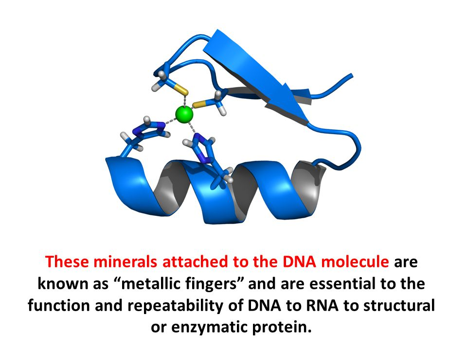 These minerals attached to the DNA molecule are known as metallic fingers and are essential to the function and repeatability of DNA to RNA to structural or enzymatic protein.