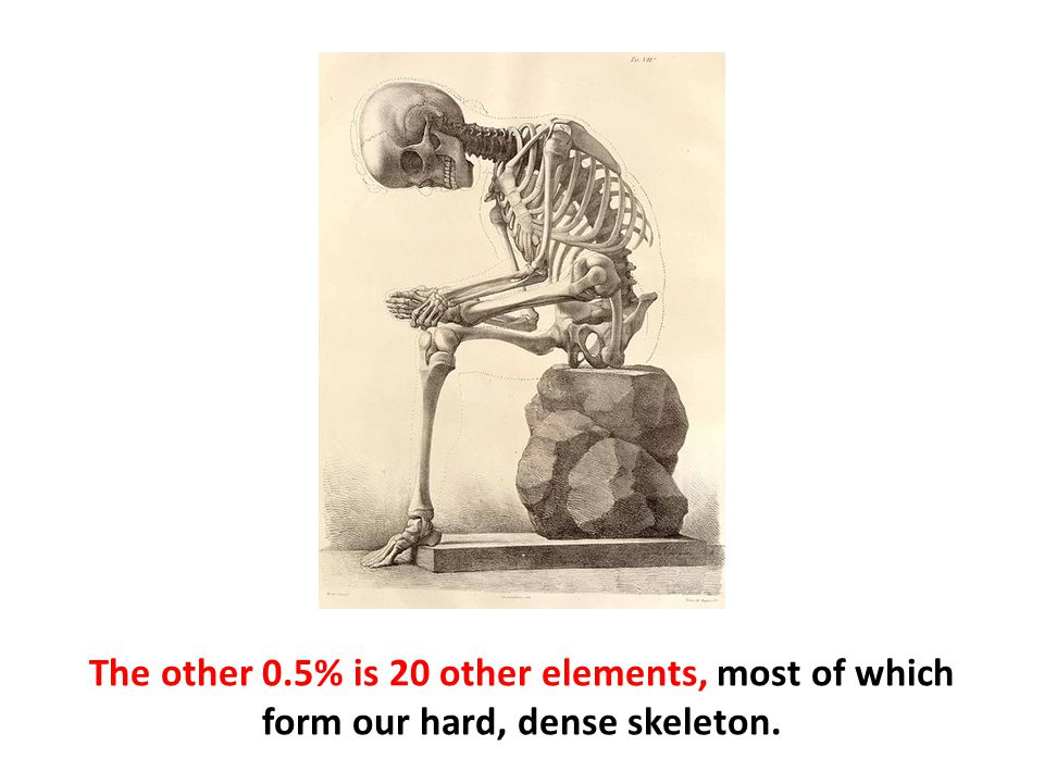 The other 0.5% is 20 other elements, most of which form our hard, dense skeleton.