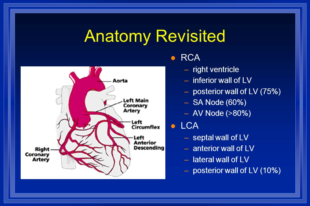 Anatomy Revisited RCA LCA right ventricle inferior wall of LV