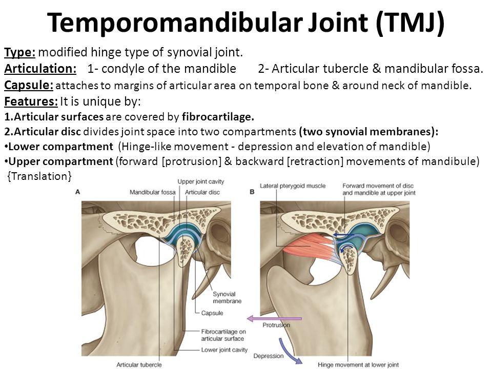 The Temporal Region And Temporo-Mandibular Joint (TMJ) - ppt video ...