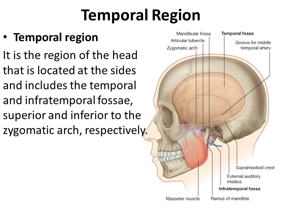 The Temporal Region And Temporo Mandibular Joint Tmj Ppt Video