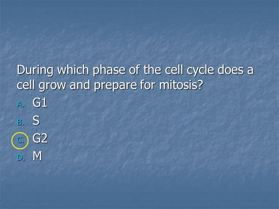 During which phase of the cell cycle does a cell grow and prepare for mitosis