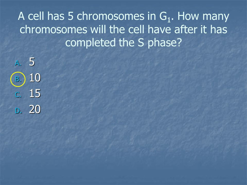 A cell has 5 chromosomes in G1
