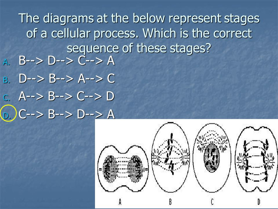 The diagrams at the below represent stages of a cellular process