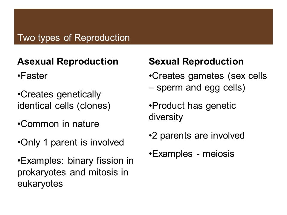 Two examples of sex cells
