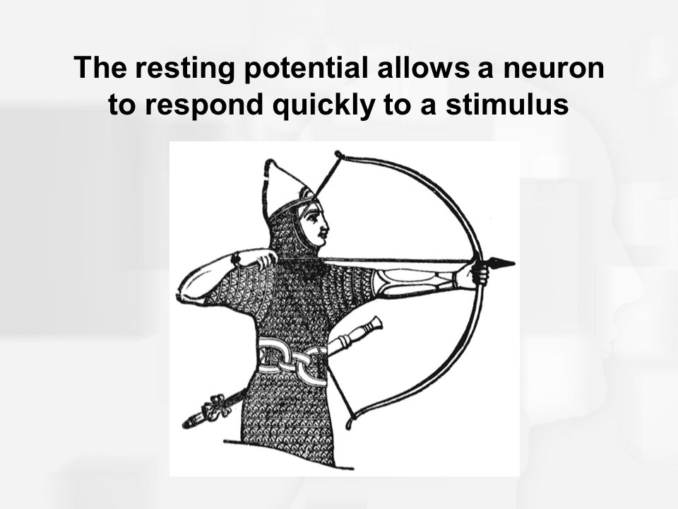 The resting potential allows a neuron to respond quickly to a stimulus