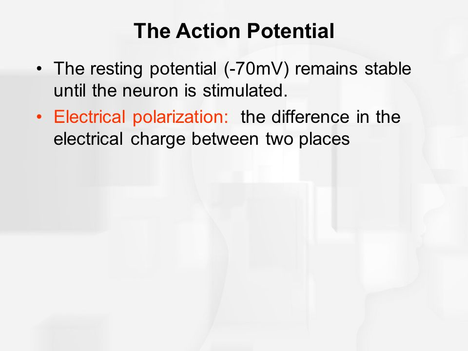 The Action Potential The resting potential (-70mV) remains stable until the neuron is stimulated.
