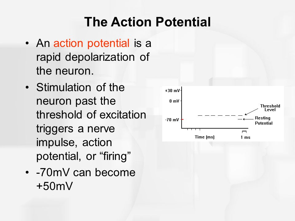 The Action Potential An action potential is a rapid depolarization of the neuron.
