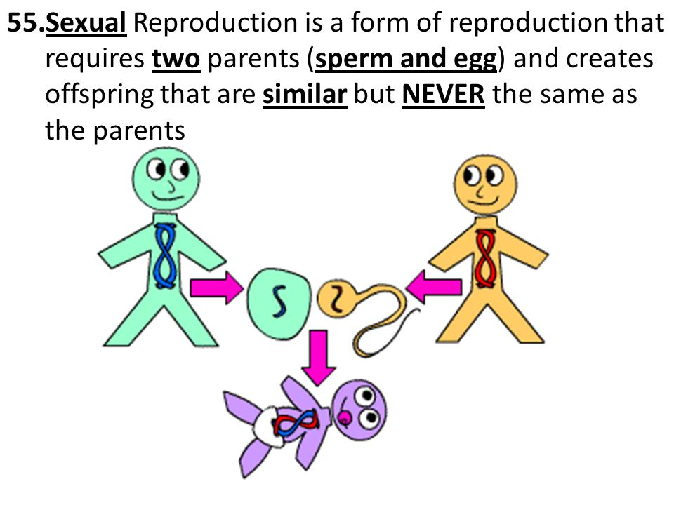 Sexual Reproduction is a form of reproduction that requires two parents (sperm and egg) and creates offspring that are similar but NEVER the same as the parents