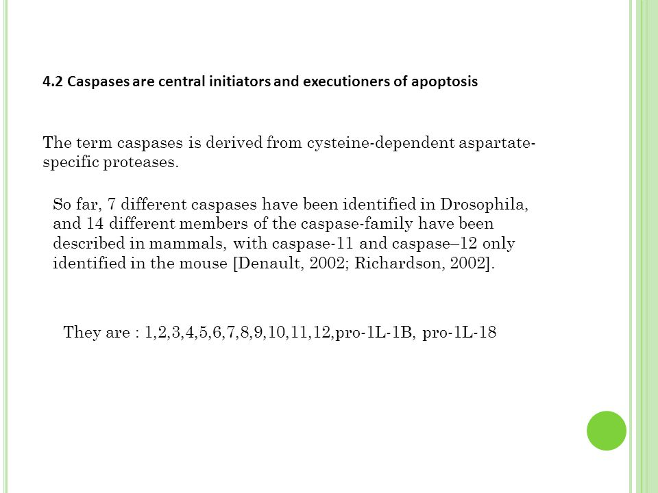 4.2 Caspases are central initiators and executioners of apoptosis