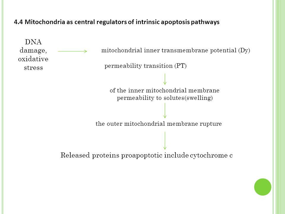 4.4 Mitochondria as central regulators of intrinsic apoptosis pathways