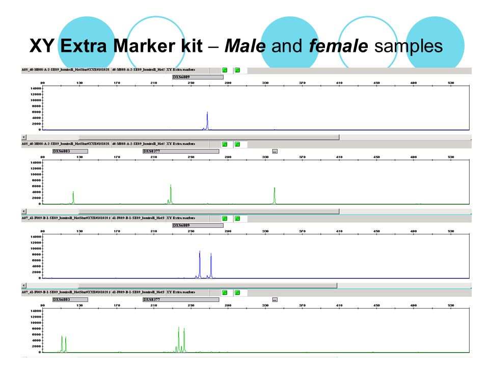 XY Extra Marker kit – Male and female samples