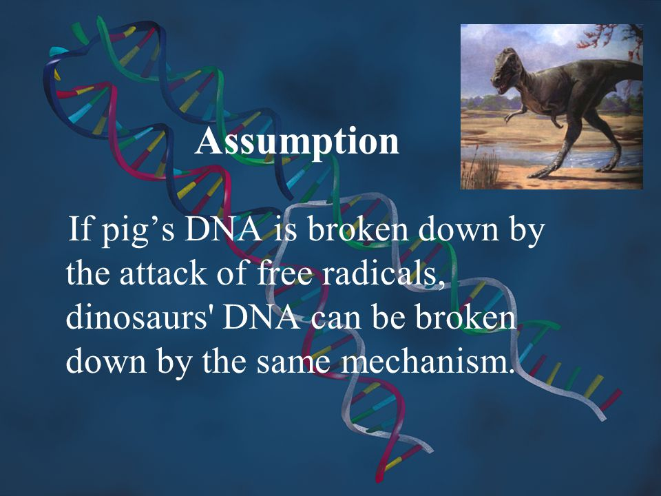 Assumption If pig's DNA is broken down by the attack of free radicals, dinosaurs DNA can be broken down by the same mechanism.