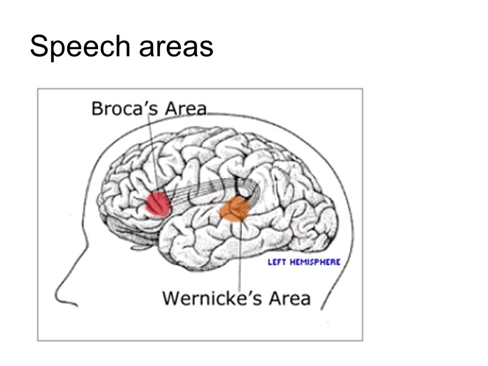 Speech areas