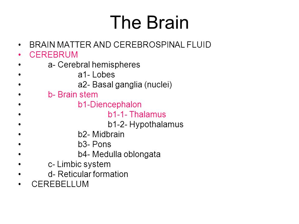 The Brain BRAIN MATTER AND CEREBROSPINAL FLUID CEREBRUM