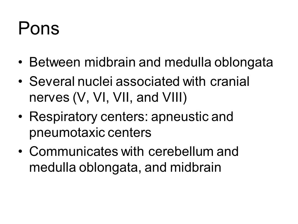 Pons Between midbrain and medulla oblongata