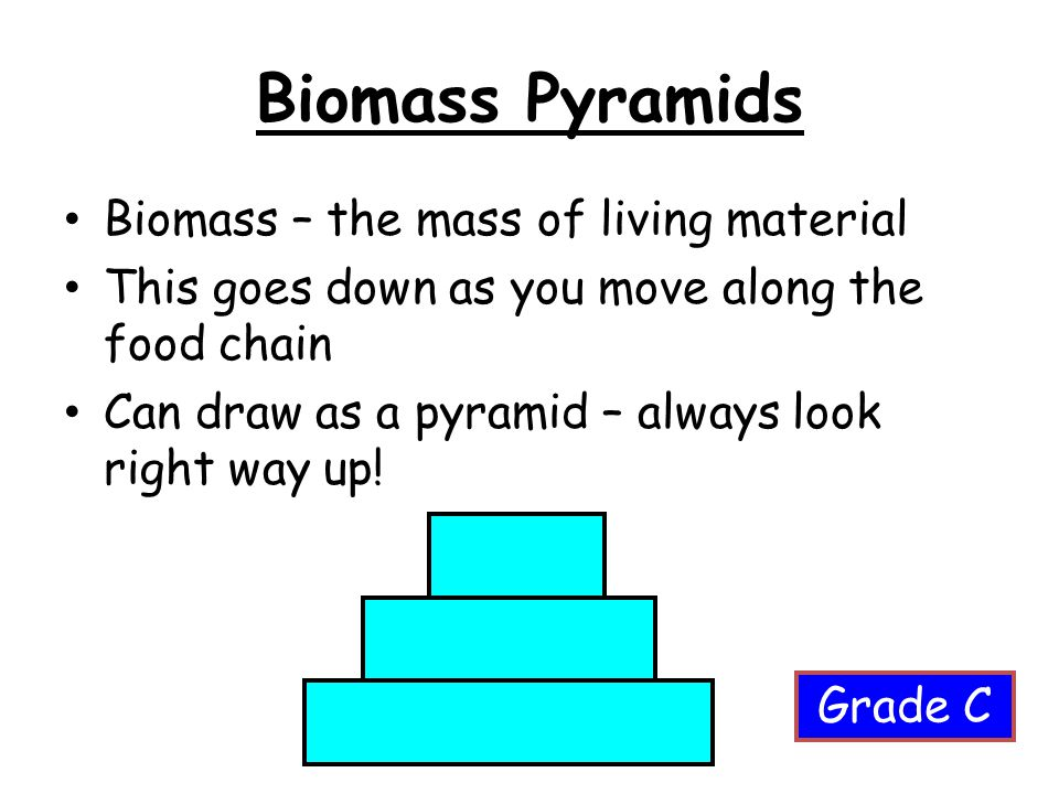 Biomass Pyramids Biomass – the mass of living material