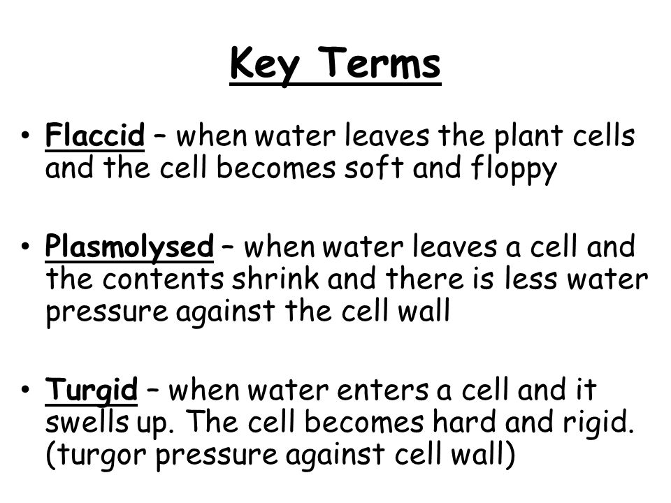 Key Terms Flaccid – when water leaves the plant cells and the cell becomes soft and floppy.