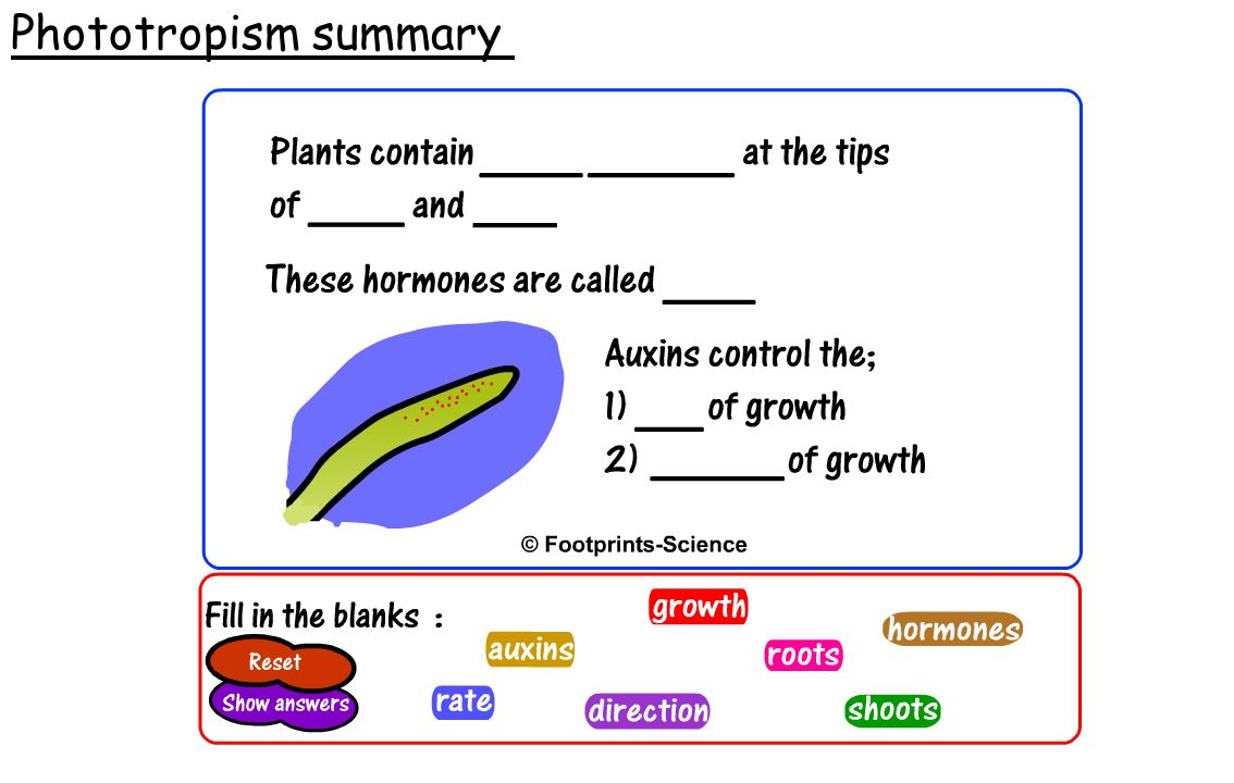 Phototropism summary