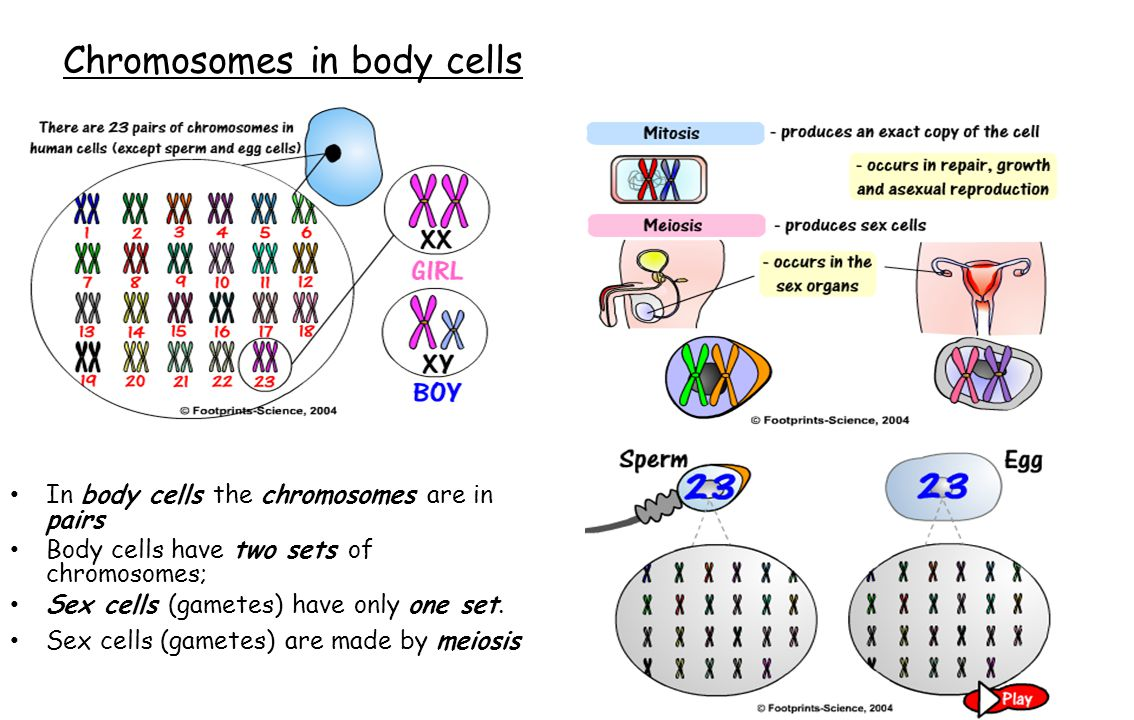 Chromosomes in body cells