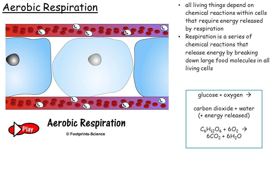 Aerobic Respiration all living things depend on chemical reactions within cells that require energy released by respiration.