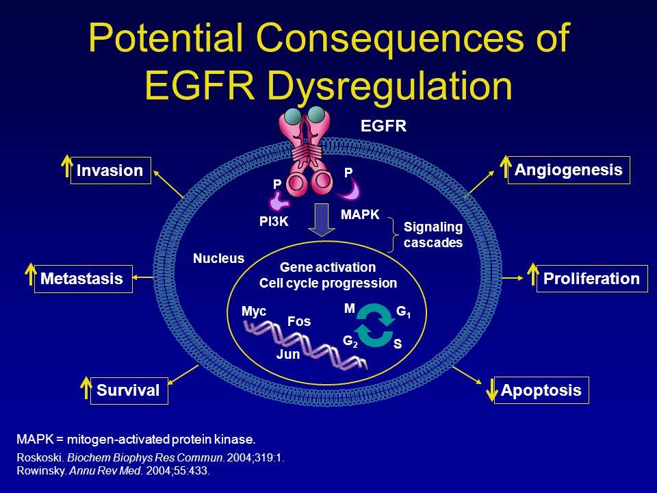 Potential Consequences of EGFR Dysregulation