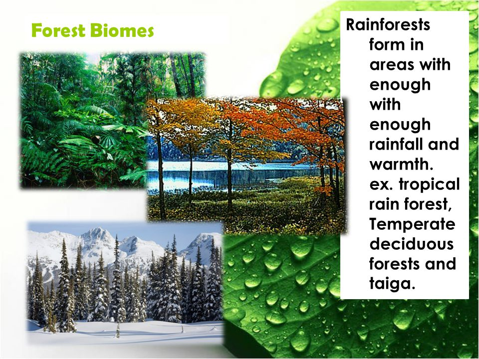 Rainforests form in areas with enough with enough rainfall and warmth