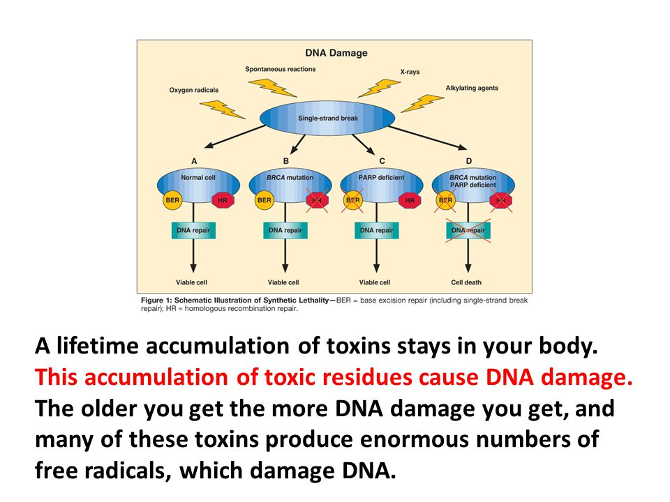 A lifetime accumulation of toxins stays in your body