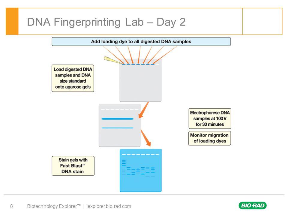 dna fingerprinting for criminal investigations biotechnology