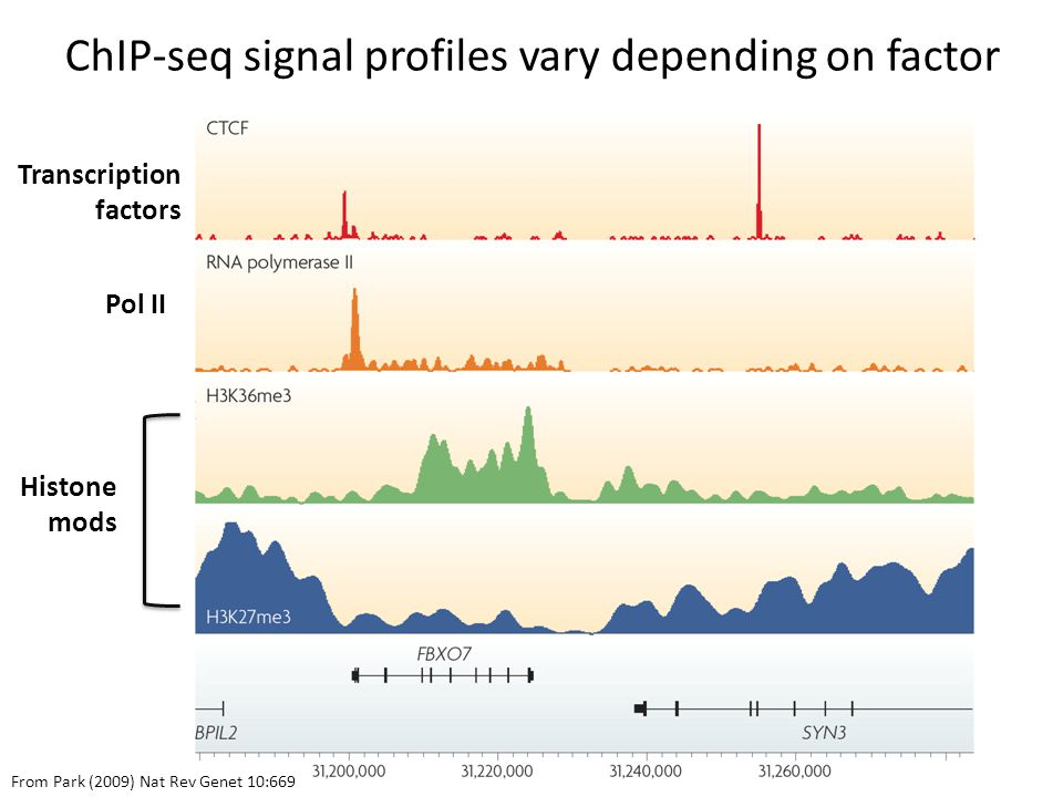 ChIP-seq signal profiles vary depending on factor