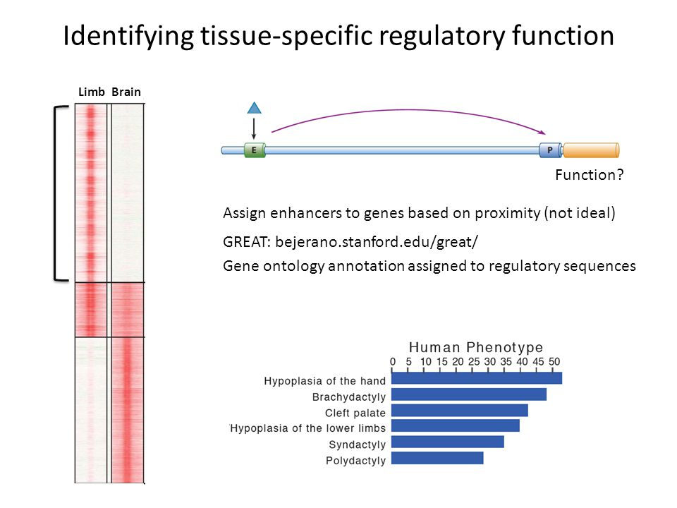 Identifying tissue-specific regulatory function