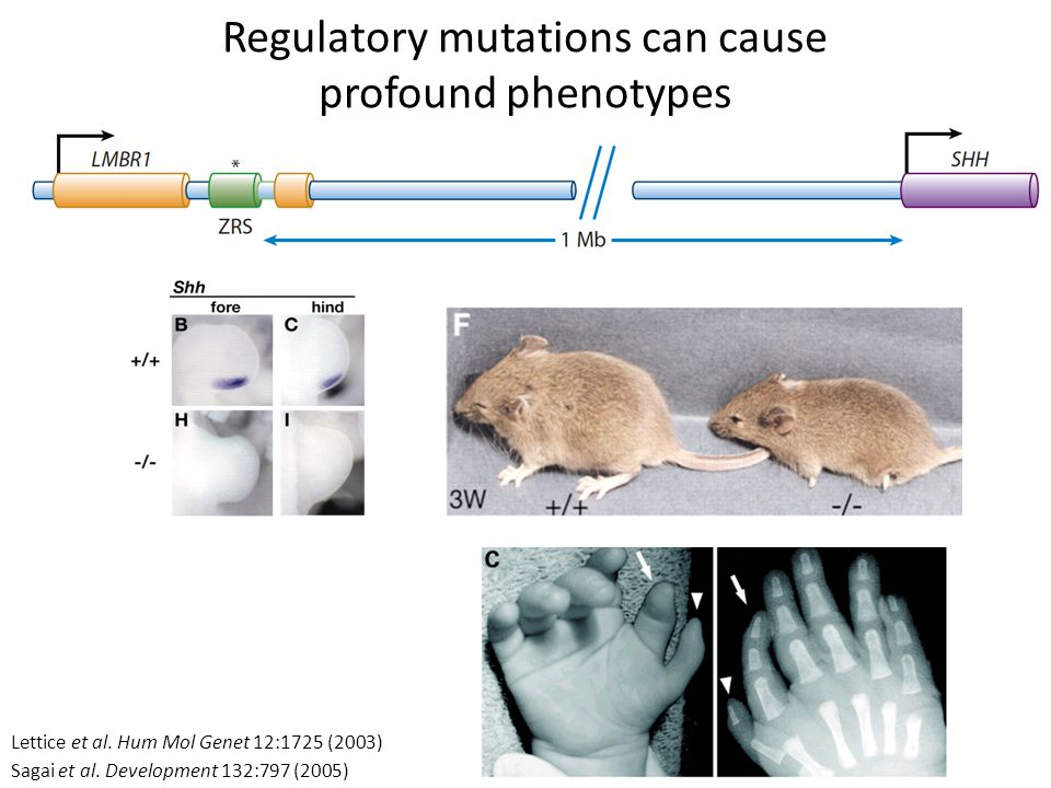 Regulatory mutations can cause