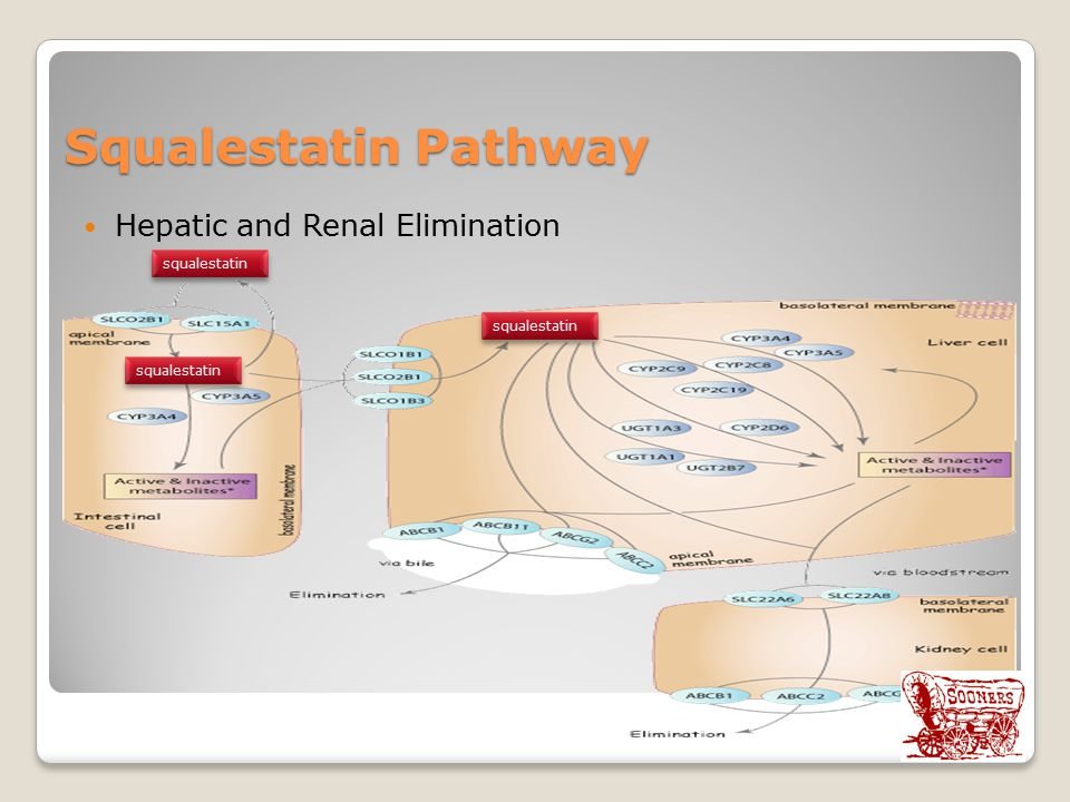 Squalestatin Pathway Hepatic and Renal Elimination