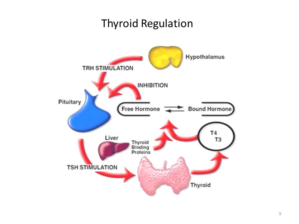 Thyroid Regulation