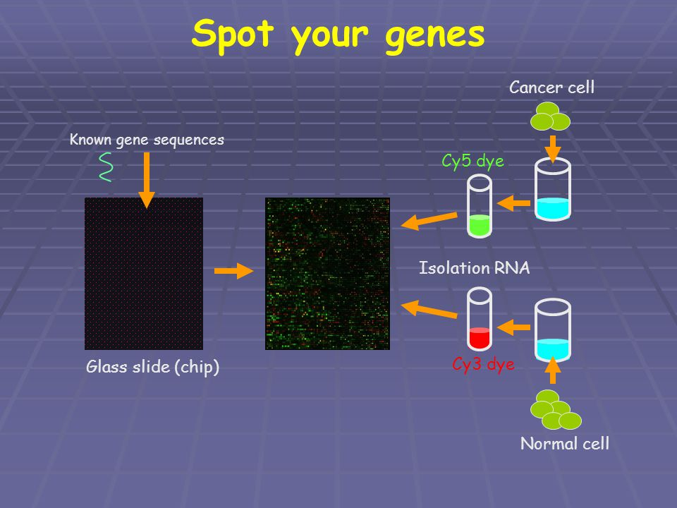 Spot your genes Cancer cell Cy5 dye Isolation RNA Cy3 dye