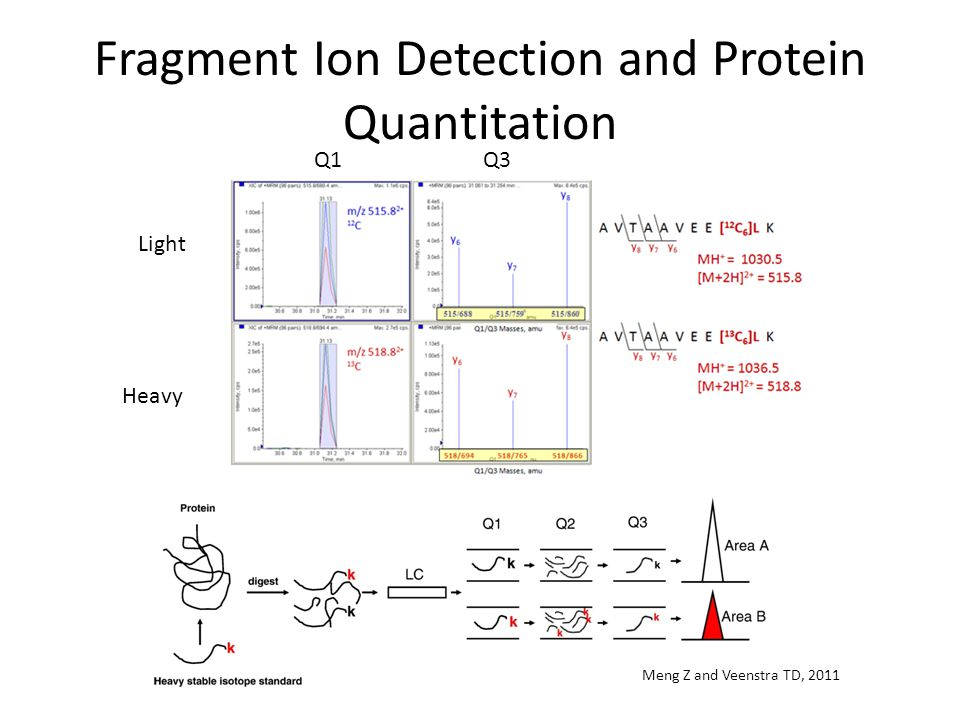 Fragment Ion Detection and Protein Quantitation