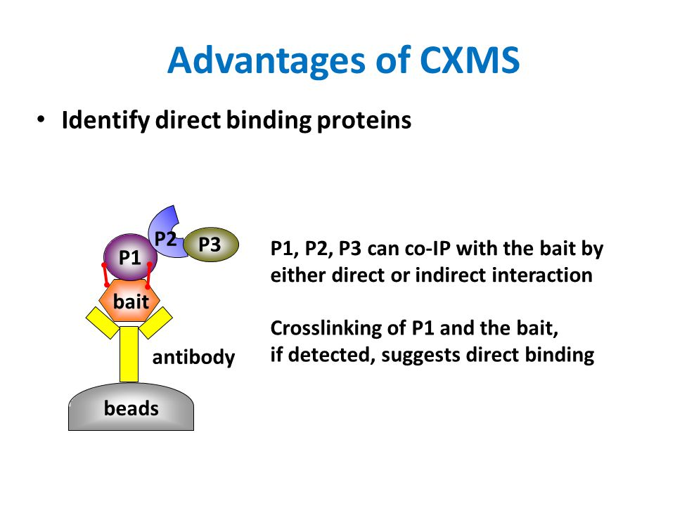 Advantages of CXMS Identify direct binding proteins P2 P3