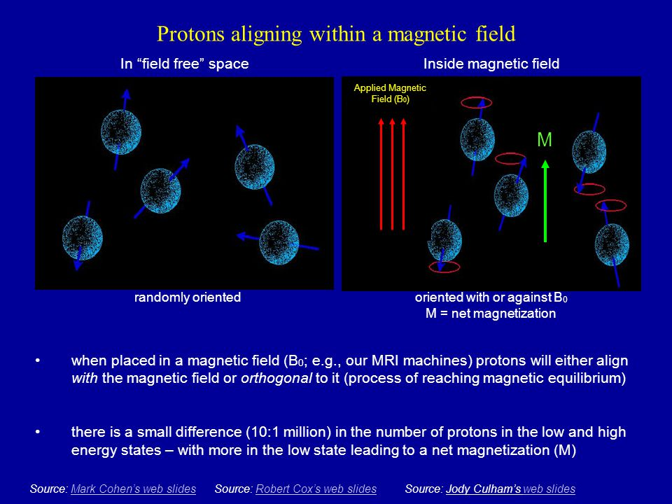 Protons aligning within a magnetic field