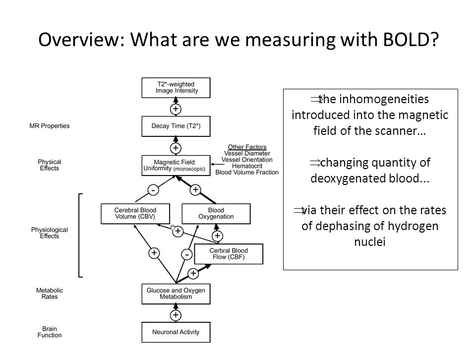 Overview: What are we measuring with BOLD
