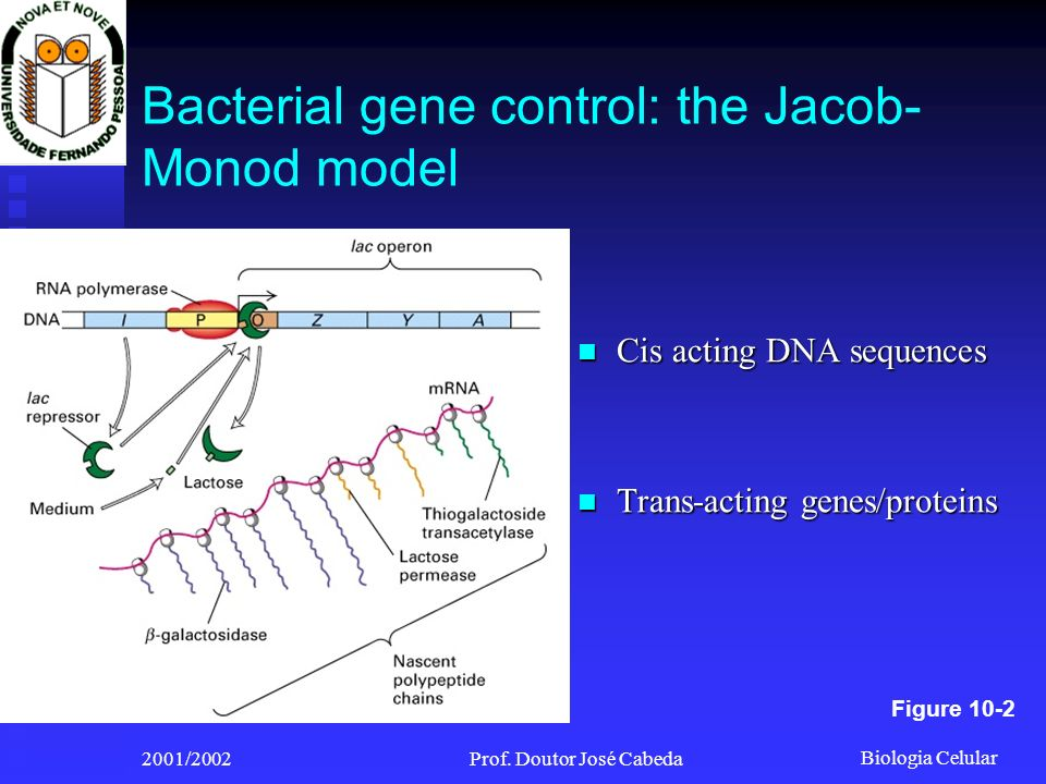 Bacterial gene control: the Jacob-Monod model
