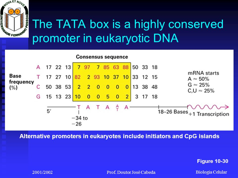 The TATA box is a highly conserved promoter in eukaryotic DNA